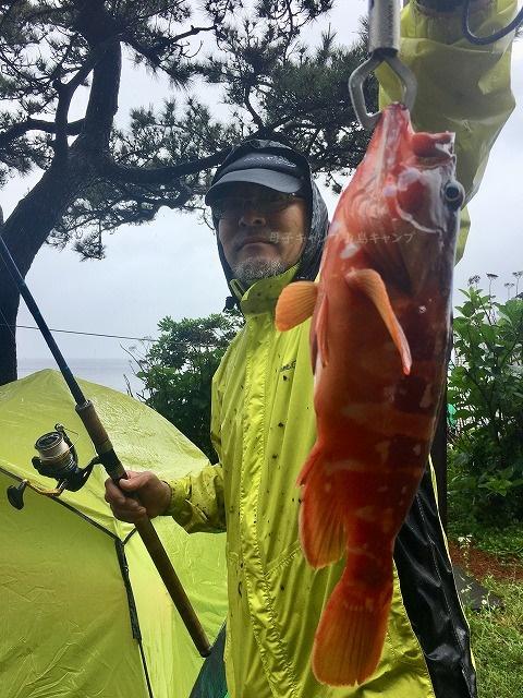 高級魚アカハタ