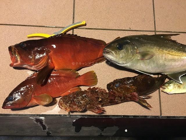 三宅島釣りオニカサゴ、カサゴ、カンパチ、アカハタ