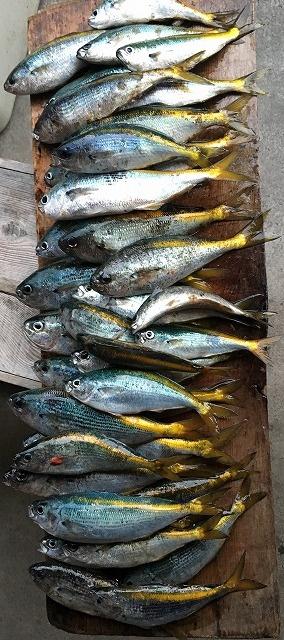 式根島mタカベ釣り