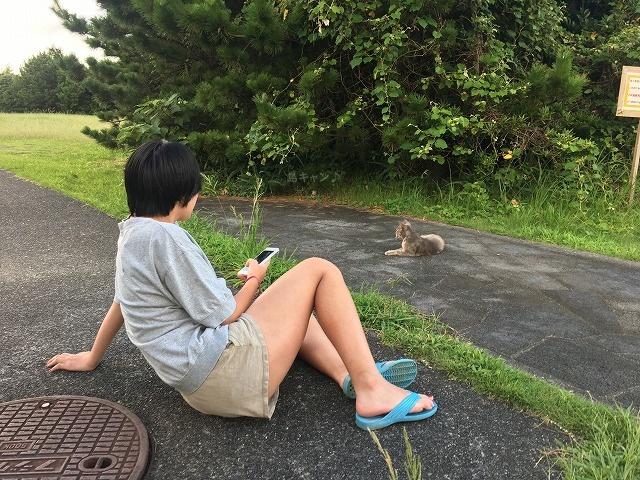 八丈島キャンプ場の猫の写真