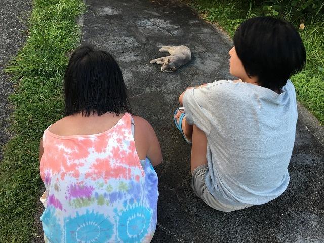 八丈島キャンプ場の猫