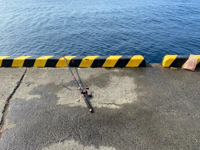 岡田港釣り