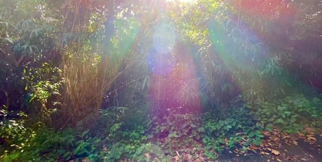 八丈島のジャングルの光